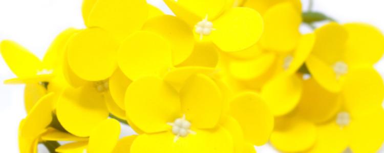 Fleurs de savon jacinthes jaunes