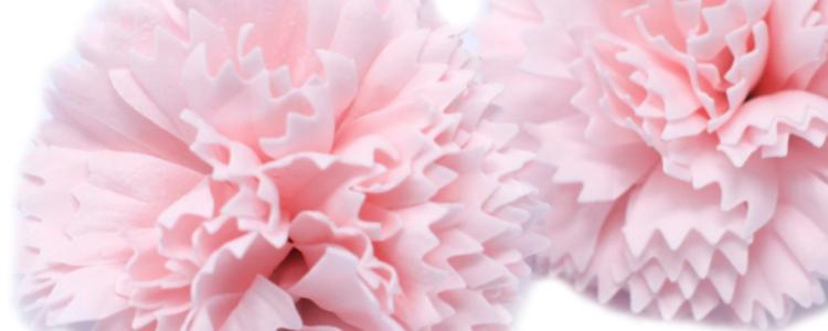 Fleurs de savon œillets roses pâles