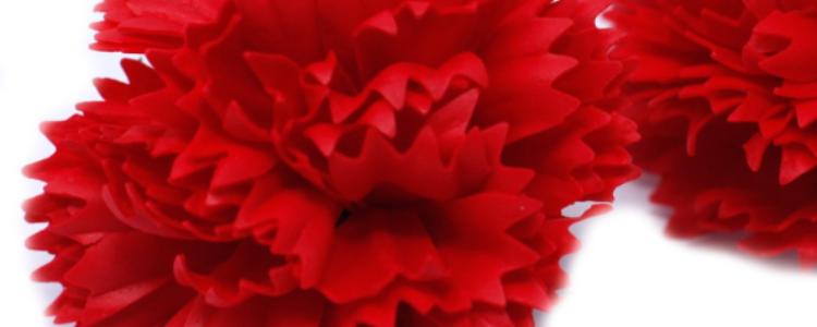 Fleurs de savon œillets rouges