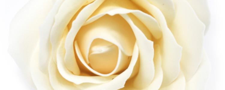 Fleurs de savon roses larges ivoire