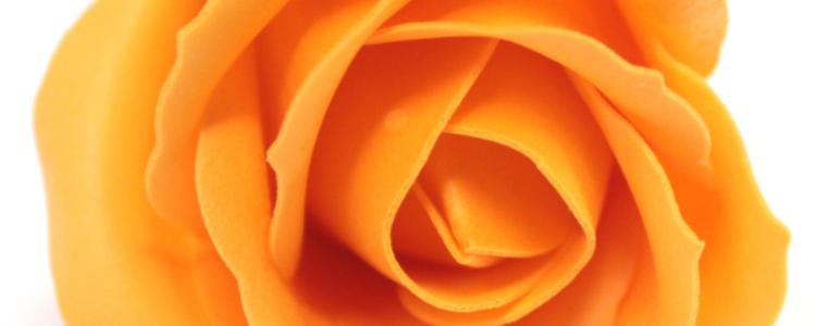 Fleurs de savon roses médiums abricots