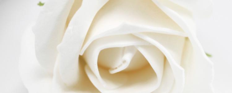 Fleurs de savon roses médiums blanches