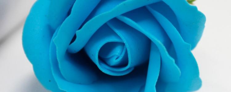 Fleurs de savon roses médiums bleu ciel