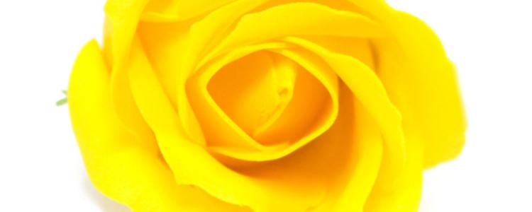 Fleurs de savon roses médiums jaunes