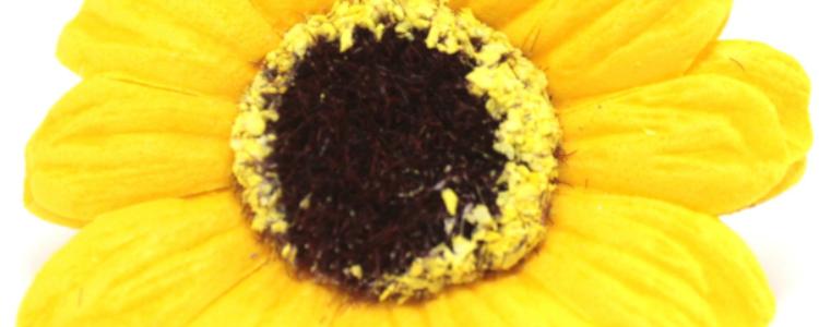 Fleurs de savon petits tournesols